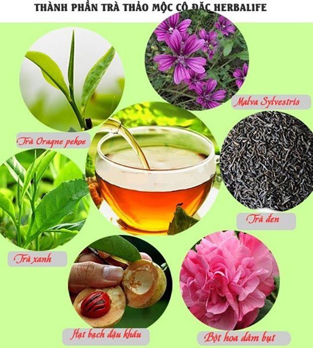 thành phần trà giảm cân herbalife